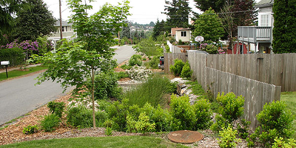 South Thornton Natural Drainage Systems Utilities Seattle Gov
