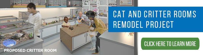 Cat and critter rooms remodel project - click to learn more