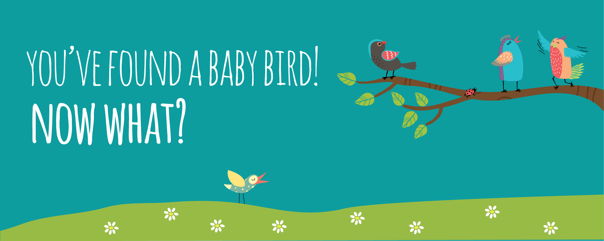 "Link to ""You've Found a Baby Bird, Now What?"" blog post"