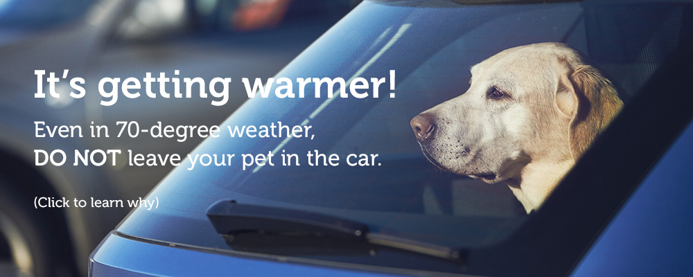 Don't leave your pet in your car. Click to learn why.