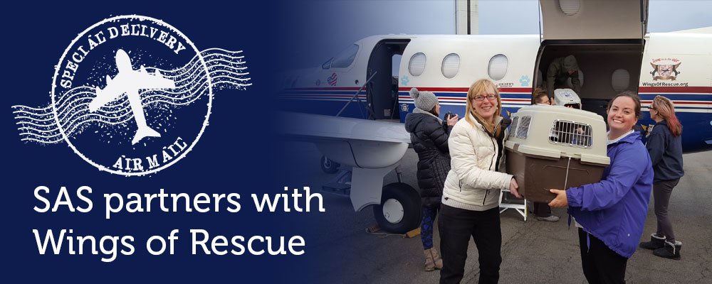 We partnered with Wings of Rescue to save 12 animals from overcrowded shelters