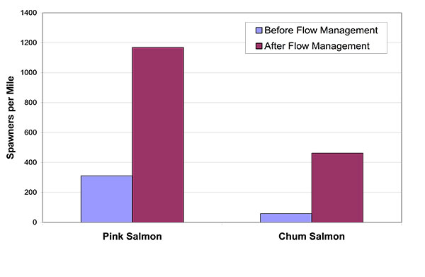 Pink and ChumSalmon